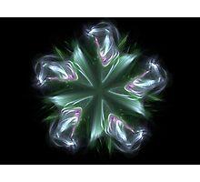 starflower Photographic Print