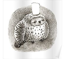 Sleeping Grey Owl In a Cylinder Poster