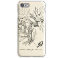 Southern wild flowers and trees together with shrubs vines Alice Lounsberry 1901 042 Texan Red Oak iPhone Case/Skin