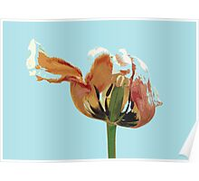 Overblown Tulip 02b Poster