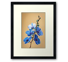 Mother's Day Orchid Framed Print