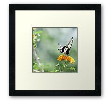 ...flights of unexpected lightness... Framed Print