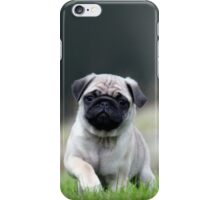 Cute Pug Dog In Grass iPhone Case/Skin