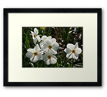 Sparkling, Fabulous White Narcissus with a Touch of Red Framed Print