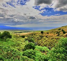 South Kohala - Hawaii by DJ Florek