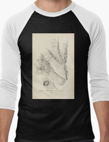 Southern wild flowers and trees together with shrubs vines Alice Lounsberry 1901 009 Torrey Tree Men's Baseball ¾ T-Shirt