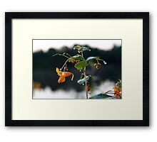 touch-me-not Framed Print