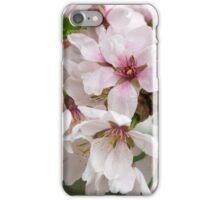 Spring Flower Series 48 iPhone Case/Skin