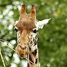 Hungry Giraffe by AnnDixon