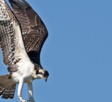 In for the kill - Osprey Sticker