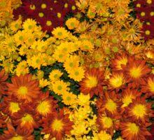 Bunches of Yellow, Copper, Orange, Red, Maroon - Fabulous Autumn Abundance Sticker