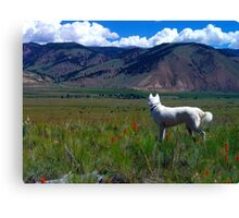 Spring in the Rocky Mountains Canvas Print