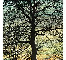 Outstretched Arms Photographic Print