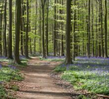 Violet Forest - Nature Photography Sticker