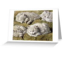 Vintage famous art - Henriette Ronner - Studies Of A Long-Haired White Cat Greeting Card