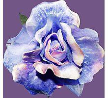 Cosmic rose Photographic Print