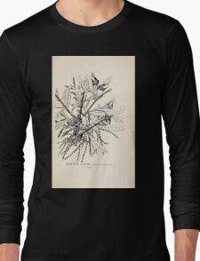 Southern wild flowers and trees together with shrubs vines Alice Lounsberry 1901 047 Live Oak Long Sleeve T-Shirt