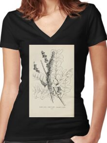 Southern wild flowers and trees together with shrubs vines Alice Lounsberry 1901 081 Lead Plant Women's Fitted V-Neck T-Shirt
