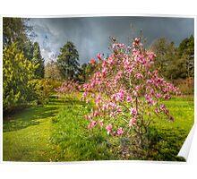 Sunlit Magnolia Poster