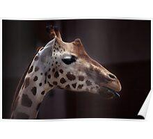 giraffe sideview Poster