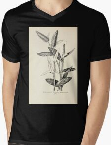 Southern wild flowers and trees together with shrubs vines Alice Lounsberry 1901 167 Pterocaulon Pycnostachyum Mens V-Neck T-Shirt