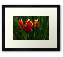 Cheerfully Wet Red and Yellow Tulips Framed Print