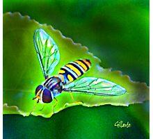 Art Nouveau Wasp Photographic Print