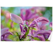 Abstract Art Of Magnolia Flower Poster