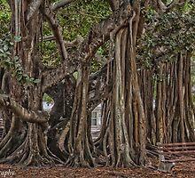 The Banyan Tree  by John  Kapusta