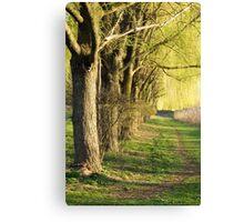 Weeping Willow Lane  Canvas Print