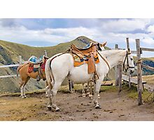 Two Horses Tied at the Top of Mountains in Quito Ecuador Photographic Print