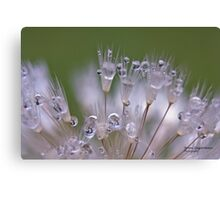 On a Dewy Morning Canvas Print