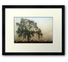 Oak Wood Abstract Framed Print