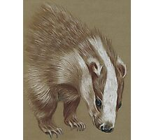 badger Photographic Print
