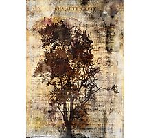 Trees sing of Time - Vintage Photographic Print