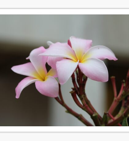 Tropical Flower1 Sticker