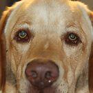 Coopers Eyes by Annie Underwood