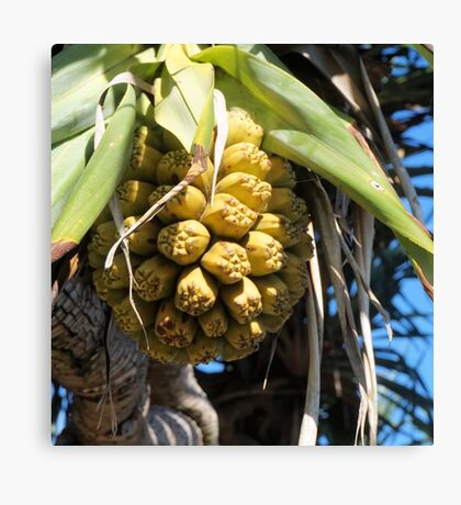 Pandanus Fruit Canvas Print
