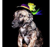 Mardi Grad Pup 2 Photographic Print