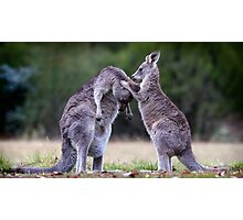 Grooming roo Photographic Print