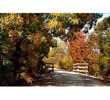 A Walkway in the Country Photographic Print