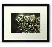 Variegated leaves Framed Print
