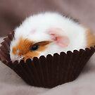 Meet Cupcake by AnnDixon