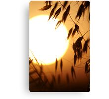 oat on a sundown Canvas Print