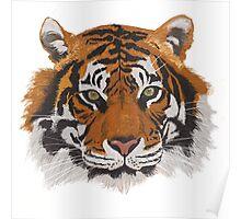 Tiger portrait Poster