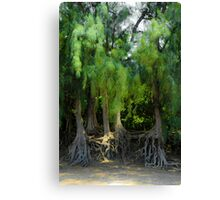 Sunlit Flora with exposed root system Canvas Print