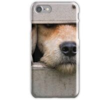 Three foxhounds looking out of trailer iPhone Case/Skin