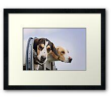 Foxhounds looking out of trailer Framed Print