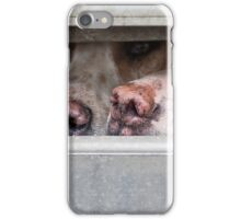 Foxhounds looking out of trailer iPhone Case/Skin