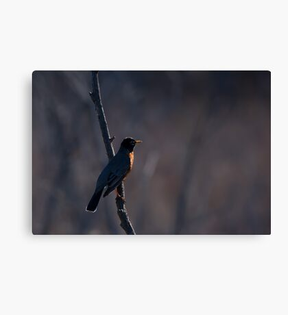 Signs of Spring - Robin Canvas Print